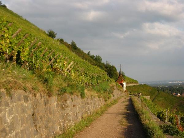 2014HDA_Alsace__du rangen vineyards.JPG